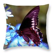 Polydamas Swallowtail Butterfly Throw Pillow
