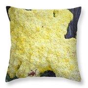 Polymyxa Slime Mold Throw Pillow