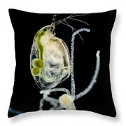 Polyp Capturing Waterflea, Lm Throw Pillow