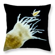 Polyp Of A. Aurita Jellyfish, Lm Throw Pillow