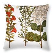 Pomegranate, 1613 Throw Pillow