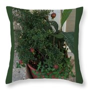 Pomegranate In The Pot Greece  Throw Pillow