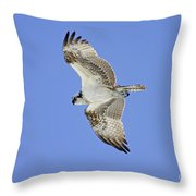 Ponce Osprey 1 Throw Pillow