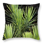 Ponderosa Pine 10 Throw Pillow