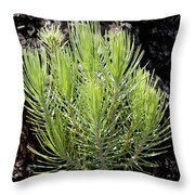 Ponderosa Pine 5 Throw Pillow