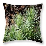 Ponderosa Pine 7 Throw Pillow