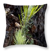 Ponderosa Pine 8 Throw Pillow