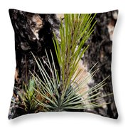Ponderosa Pine 9 Throw Pillow