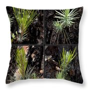 Ponderosa Pine Throw Pillow