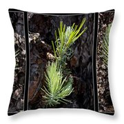 Ponderosa Pine Wide Throw Pillow
