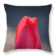 Pontificating Pink Throw Pillow