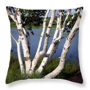 Pontook Birch Throw Pillow
