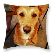 Pooch Throw Pillow