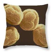 Poplar Pollen Sem Throw Pillow