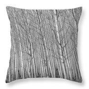 Poplars Beauty Trees Throw Pillow