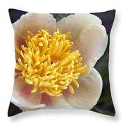 Poppy  05 Throw Pillow