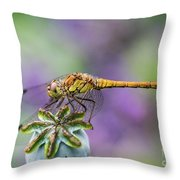 Poppy And The Dragonfly Throw Pillow