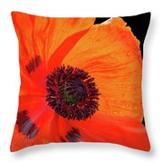 Poppy With Raindrops 2 Throw Pillow