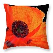 Poppy With Raindrops 3 Throw Pillow