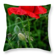 Poppy's Course Of Life Throw Pillow