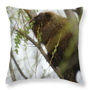Porcupine Eating Leaves Throw Pillow