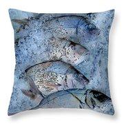 Porgies On Ice Throw Pillow