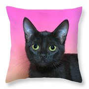 Portrait Of A Black Kitten Throw Pillow