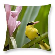 Portrait Of A Black-naped Oriole Throw Pillow