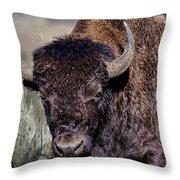 Portrait Of A Buffalo Throw Pillow