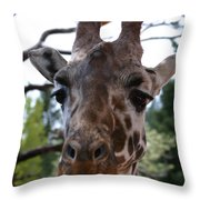 Portrait Of A Giraffe Throw Pillow