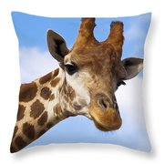 Portrait Of A Giraffe On The Background Of Blue Sky. Throw Pillow