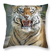 Portrait Of A Growling Tiger  Throw Pillow