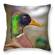 Portrait Of A Mallard Throw Pillow