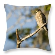 Portrait Of A Merlin Falco Columbarius Throw Pillow