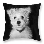 Portrait Of A Puppy In Black And White Throw Pillow