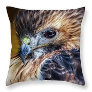 Portrait Of A Red-tailed Hawk Throw Pillow