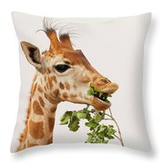 Portrait Of A Rothschild Giraffe IIi Throw Pillow