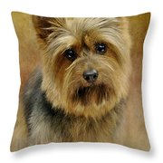 Portrait Of A Silky Terrier Throw Pillow by Stephanie Calhoun