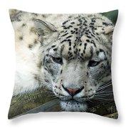 Portrait Of A Snow Leopard Throw Pillow
