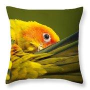 Portrait Of A Sun Conure Throw Pillow