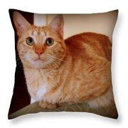 Portrait Of A Tabby Throw Pillow
