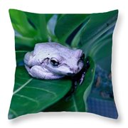 Portrait Of A Tree Frog Throw Pillow