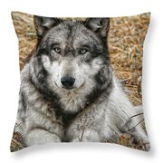 Portrait Of A Wolf Throw Pillow