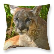 Portrait Of A Young Florida Panther Throw Pillow