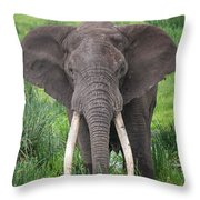 Portrait Of African Elephant Loxodonta Throw Pillow