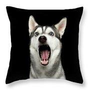 Portrait Of Amazement Siberian Husky Throw Pillow by Sergey Taran