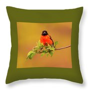 Portrait Of An Oriole Throw Pillow