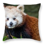 Portrait Of Cini The Red Panda Throw Pillow