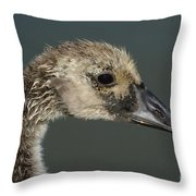 Portrait Of Month Old Canada Goose Gosling Throw Pillow