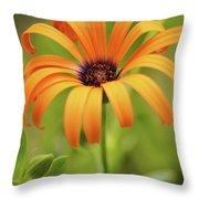 Portrait Of Orange Symphony Throw Pillow